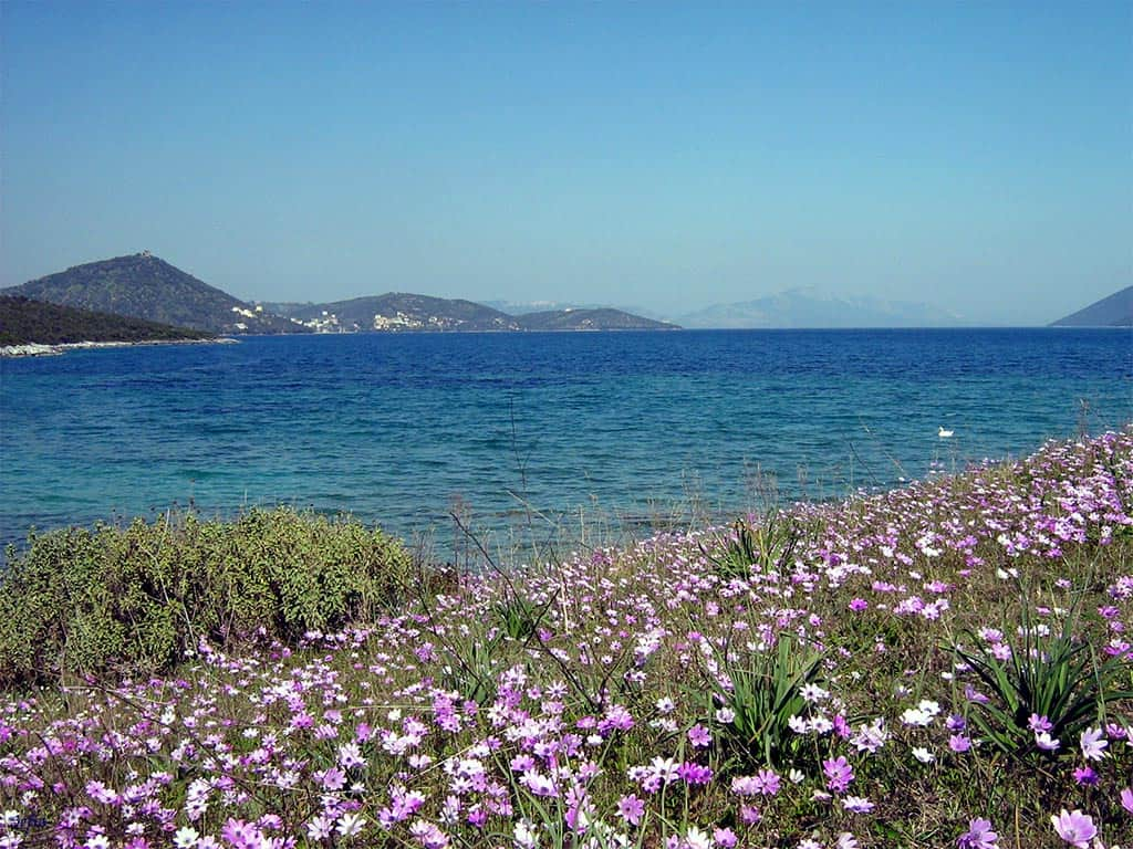 Magnesia, Thessaly's southeastern region, boasts Volos as the biggest city in its prefecture. But our family's estate is located just outside of Achilleon in a small village that retains the southernmost natural harbor in the Pagasetic Gulf