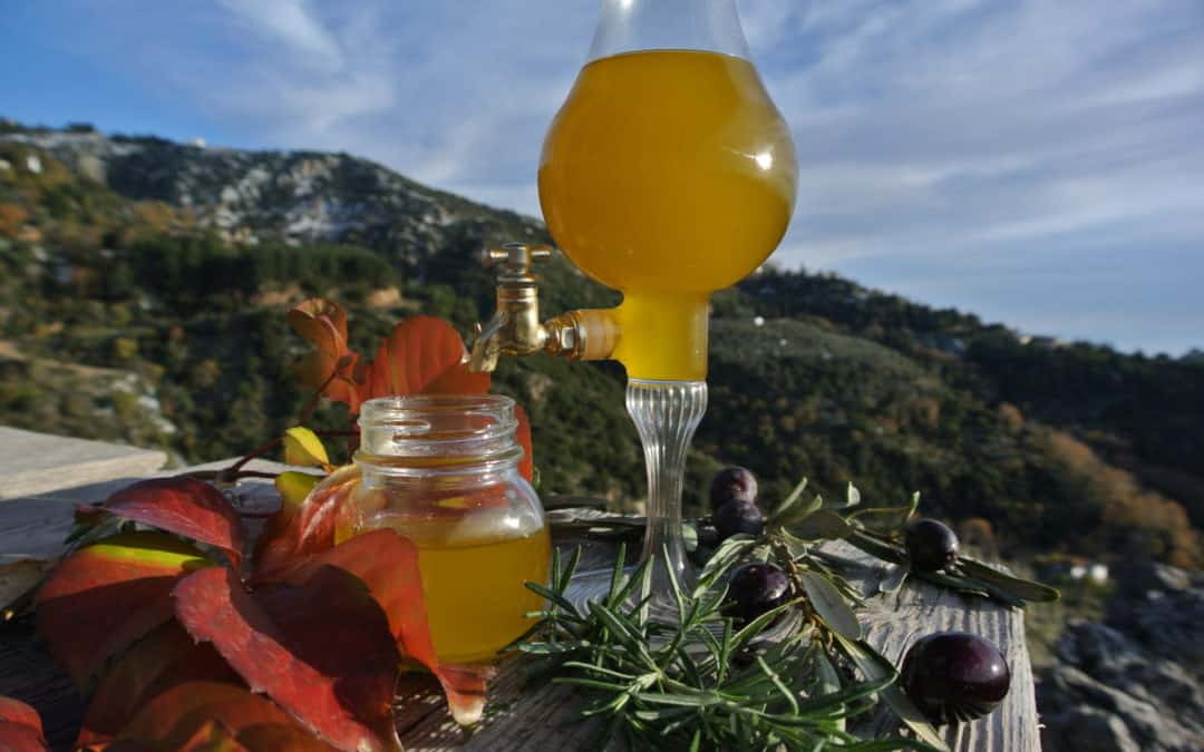 Elenolide: The most recent reason to love Extra Virgin Olive Oil