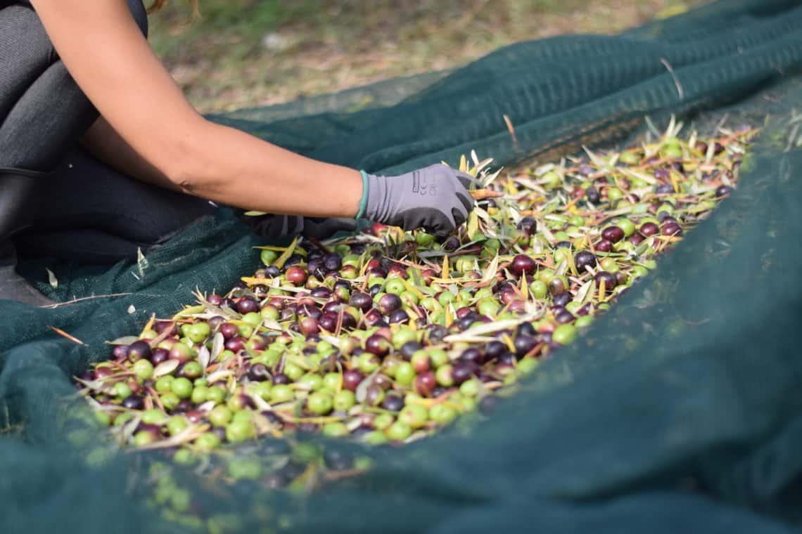 Harvesting 2018