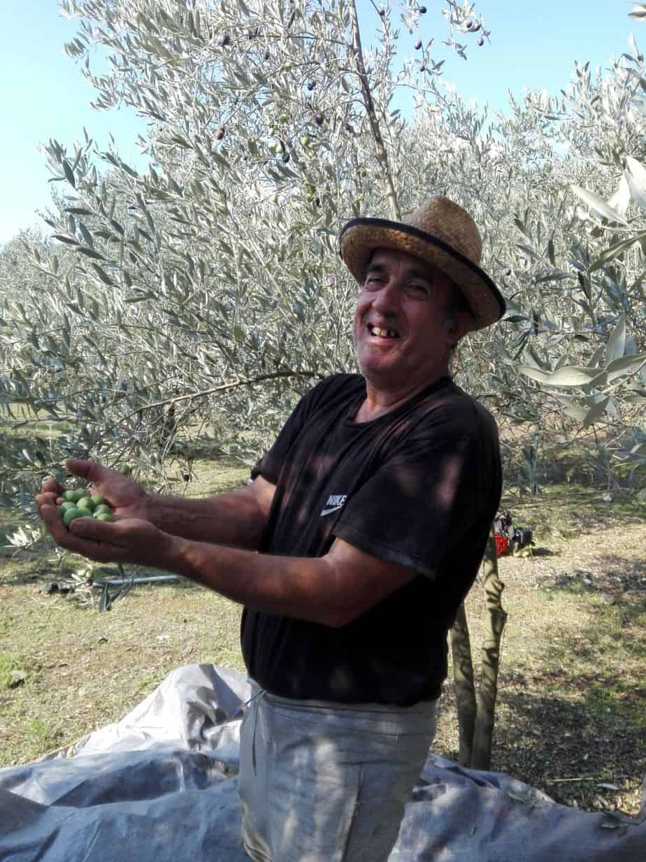Dimitris enjoys harvesting olives, from our new harvest olive oil 2019