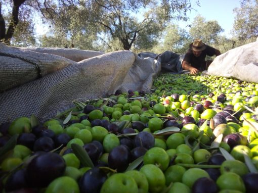 How do you define the best olive oil?