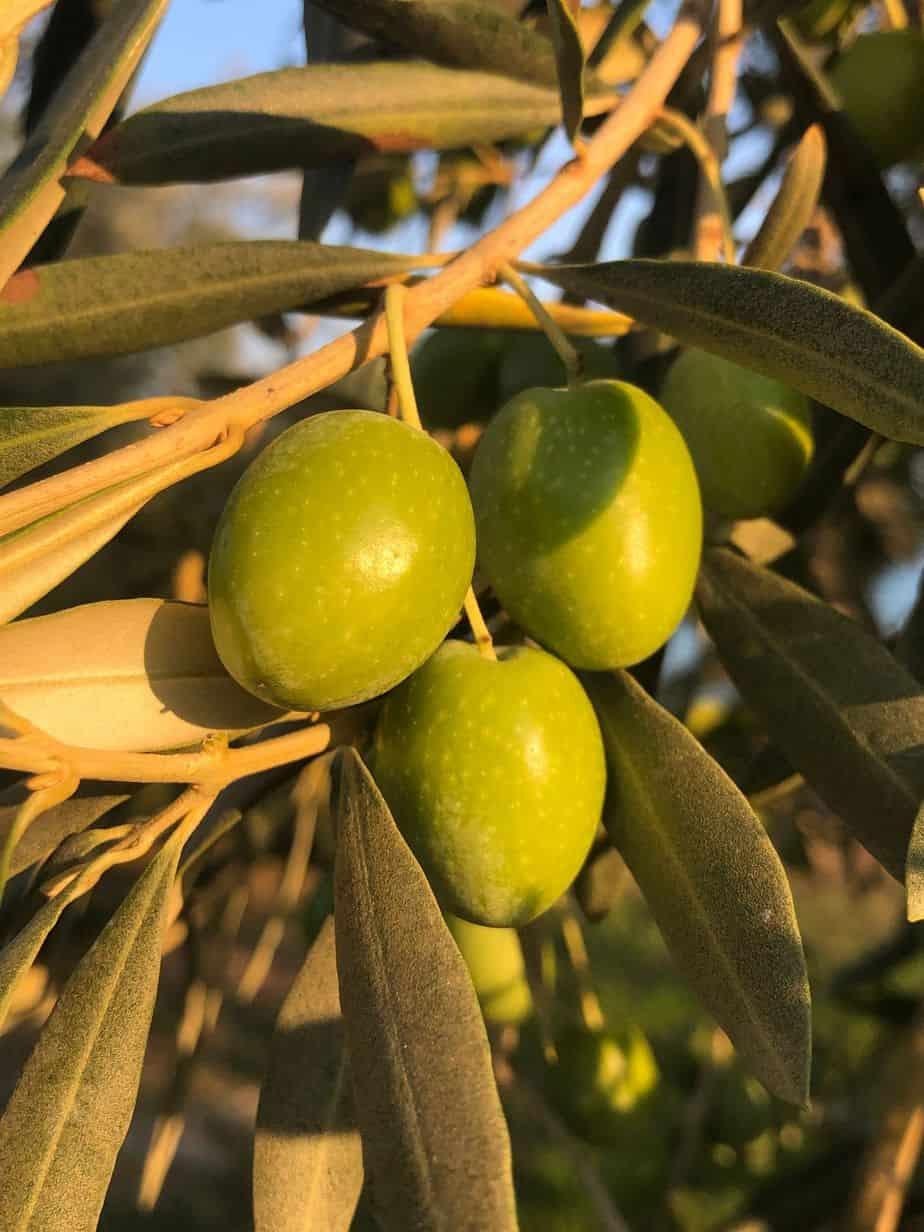Myrolion Olives