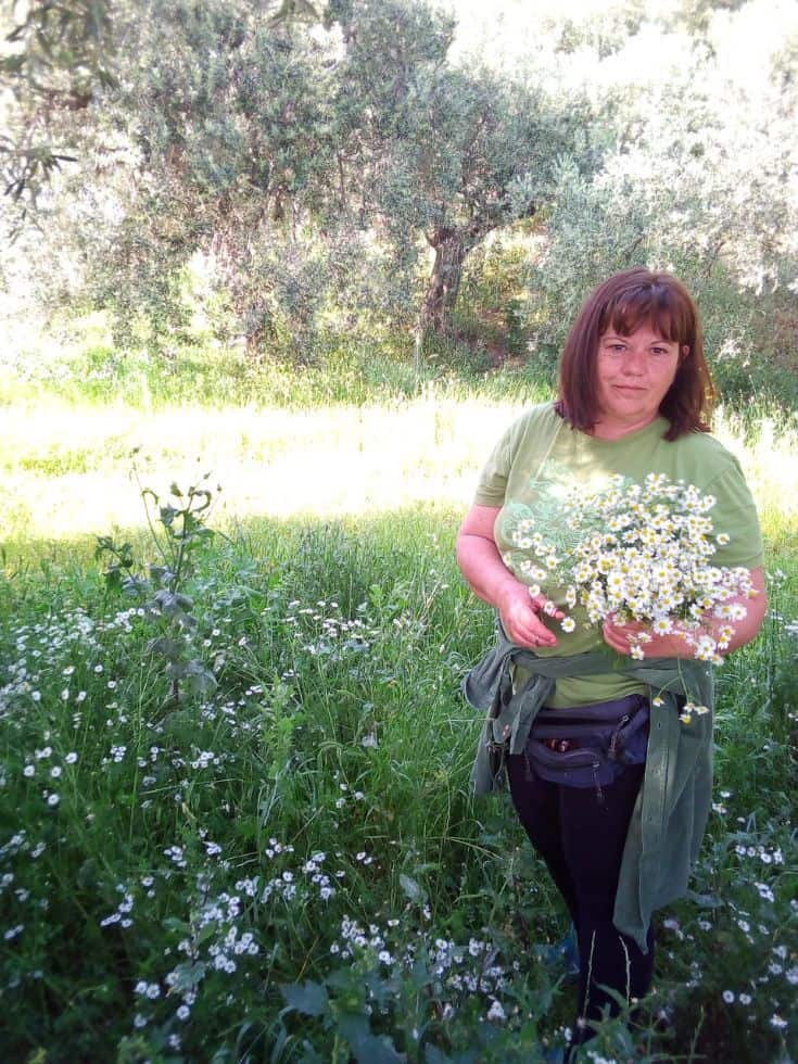 Ioanna harvesting Chamomile in our family's groves that produce organic olive oil.
